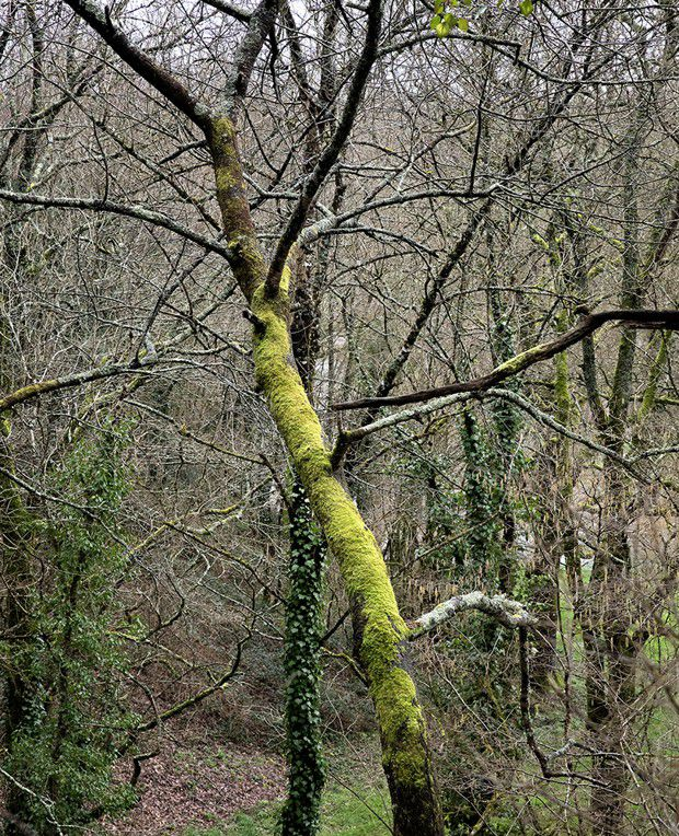 La forêt de Fabrice Hyber dont une partie est constituée d'un bois juvénile semé par Fabrice Hyber et son père au début des années 2000.