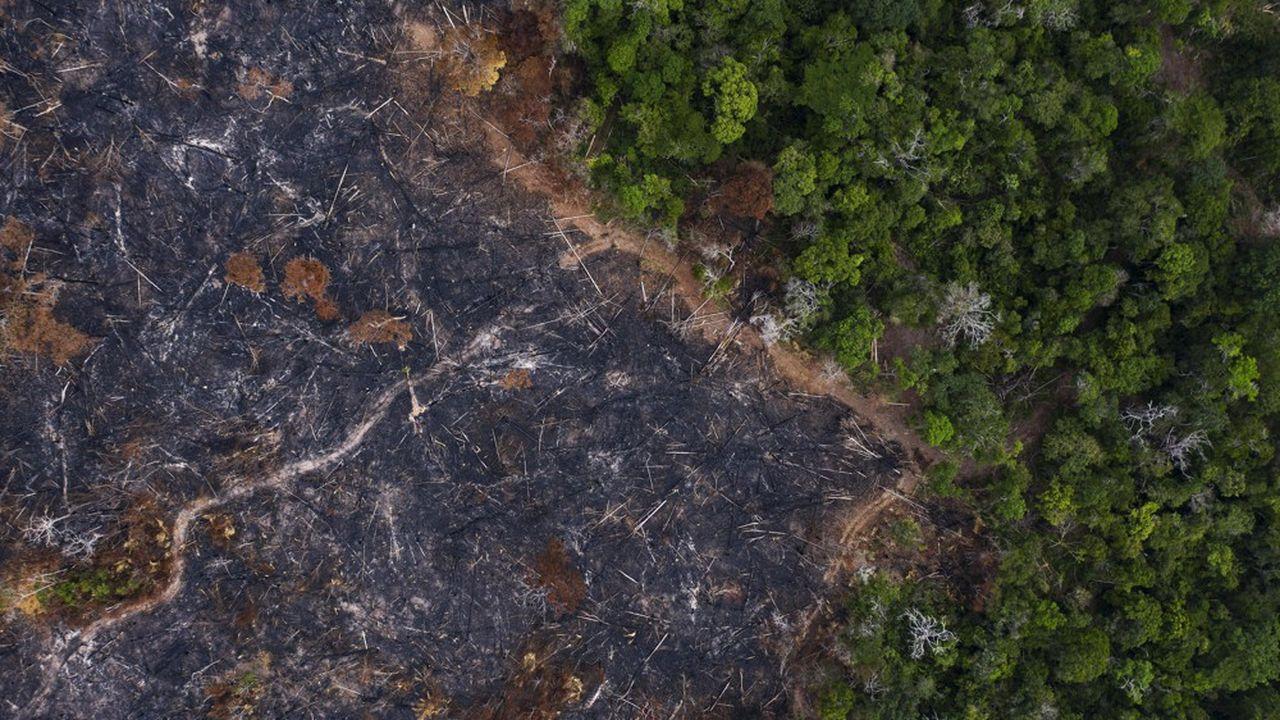 Le Brésil et l'Amazonie concentrent le tiers de la déforestation mondiale