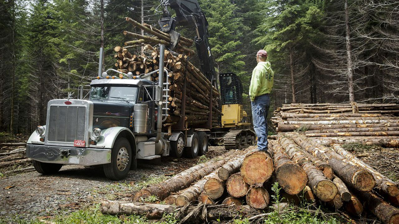 Une exploitation forestière près de Portland.
