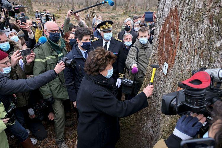 Dans la forêt de Bercé, où oeuvre aujourd'hui la quinzième génération de forestiers, «grâce au travail de ces hommes, nous sommes aujourd'hui en mesure de sélectionner huit chênes de plus d'un mètre de diamètre et de plus de 20 mètres de grume», s'est félicitée Roselyne Bachelot.