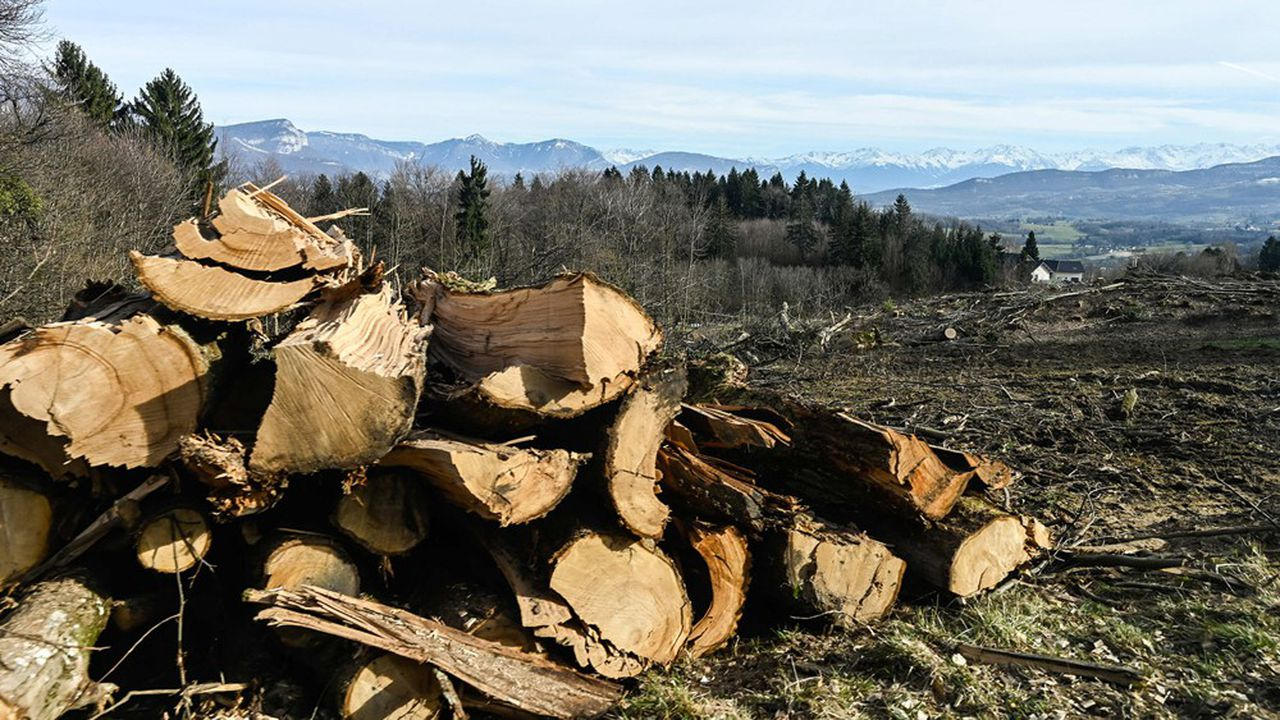 Opinion   Le bois, un atout majeur pour décarboner