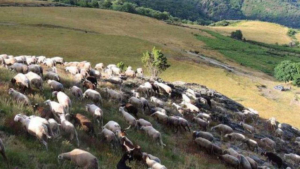 Patrick Mayet, agriculteur de Brouzet-lès-Quissac (Gard), concourt dans la catégorie «Prairies & Parcours».