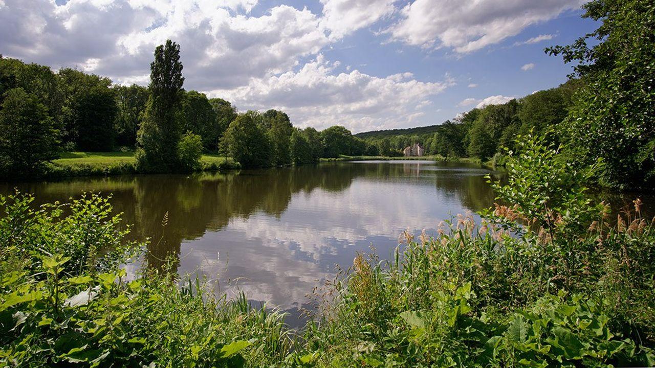 Plus de 500 hectares de la Forêt de Montmorencysont atteints par la maladie de l'encre.