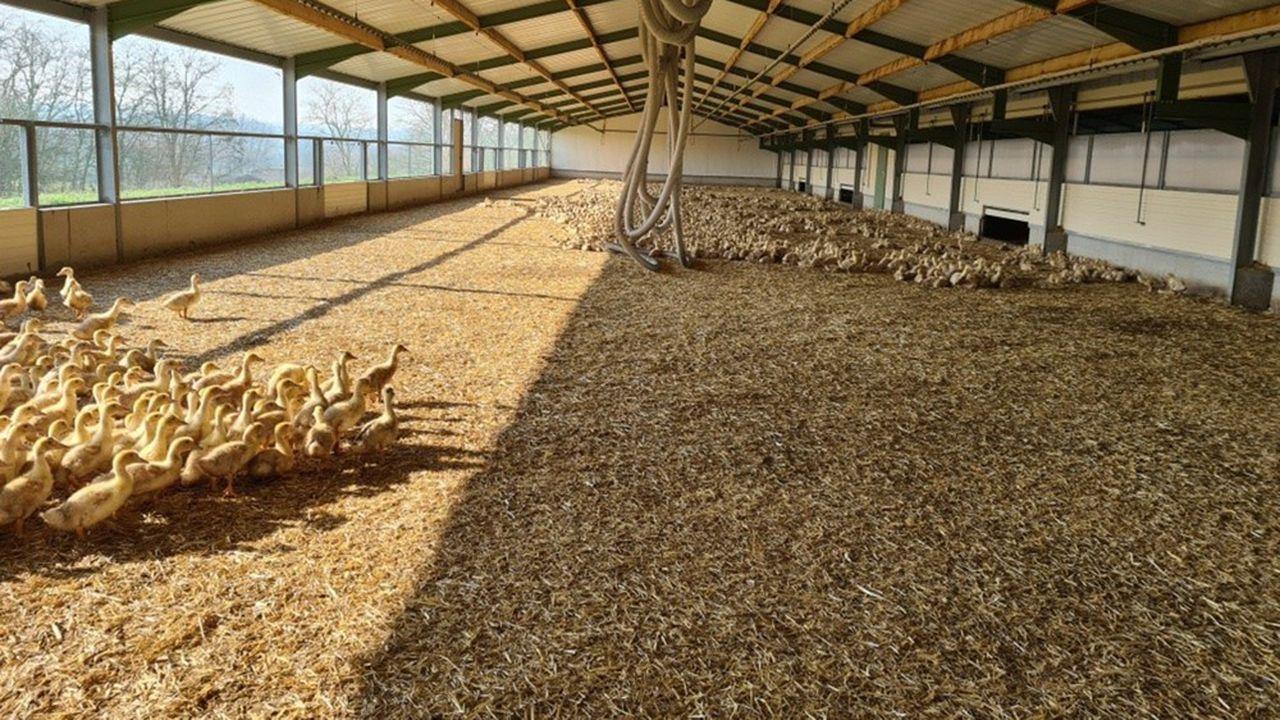 En Vendée, les élevages sont plus récents que dans le Sud-Ouest et offre des protections plus fortes contre les épizooties des oiseaux.