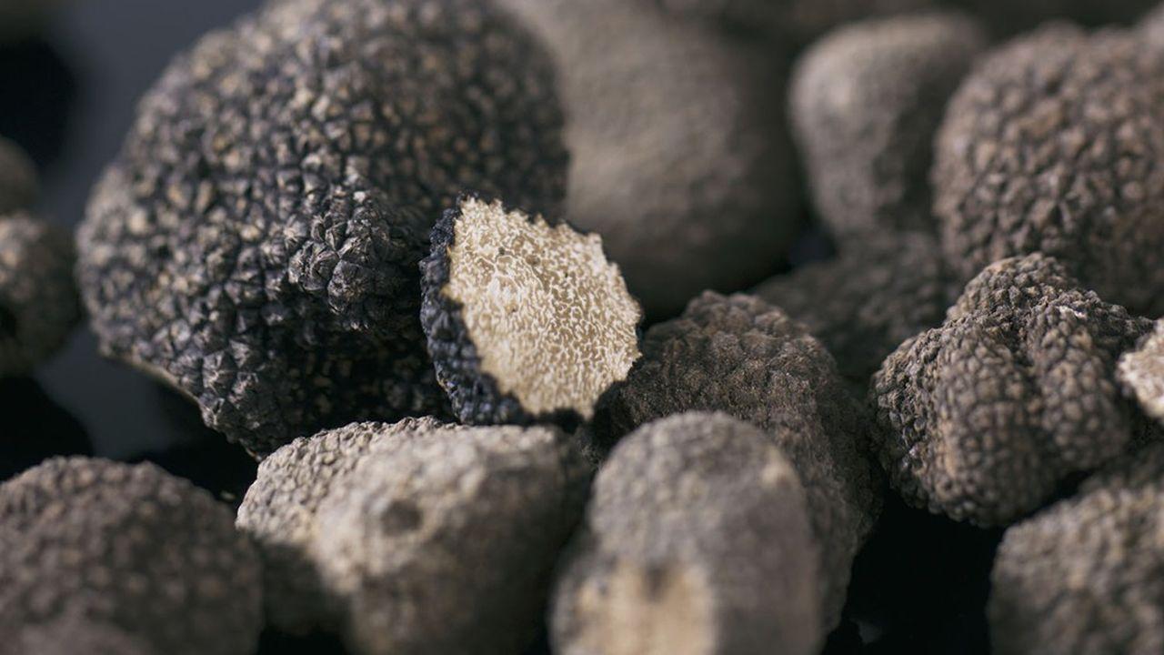 L'atypique fournisseur argentin tient l'avantage de la contre-saison, en dénichant les truffes de juin à septembre.