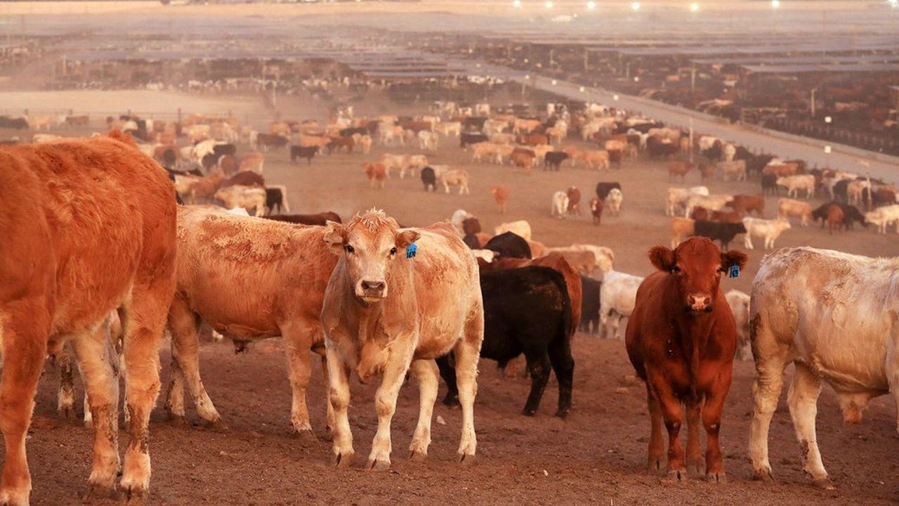 Les marchés à terme permettent de spéculer sur le cours de la plupart des matières premières et du bétail.