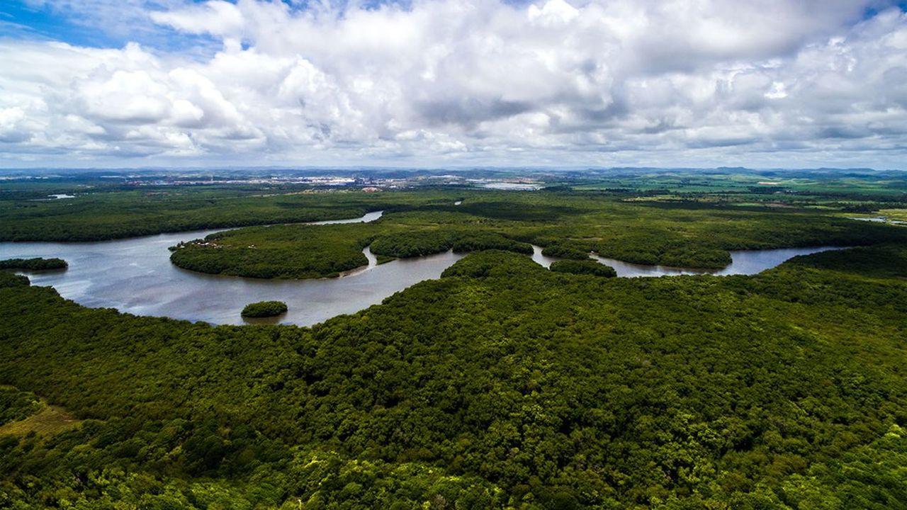 La forêt amazonienne contient encore quelques espaces totalement vierges, tout comme le massif du Congo et les terres boréales de Sibérie Orientale et du nord du Canada. Mais ce sont les derniers.