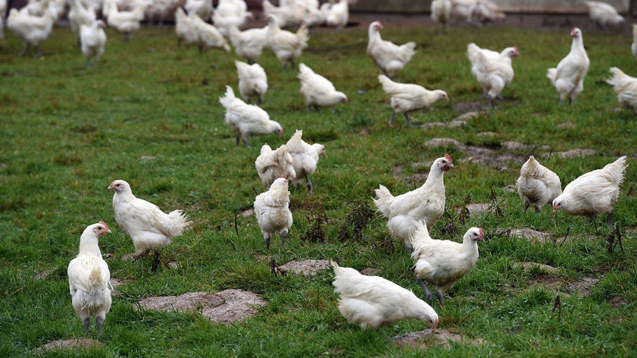 LDC trop puissant dans l'Ain, terre du poulet de Bresse, doit renoncer à deux abattoirs détenus par Ronsard dans ce département.