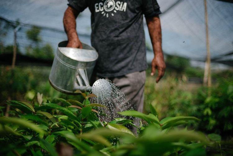 Projet Ecosia en Indonésie.