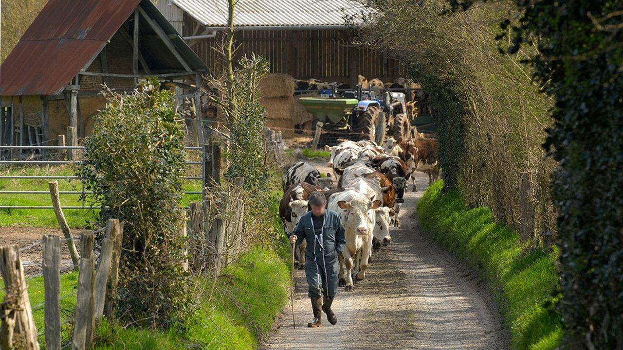 Plus de 40% du lait produit en France est exporté.