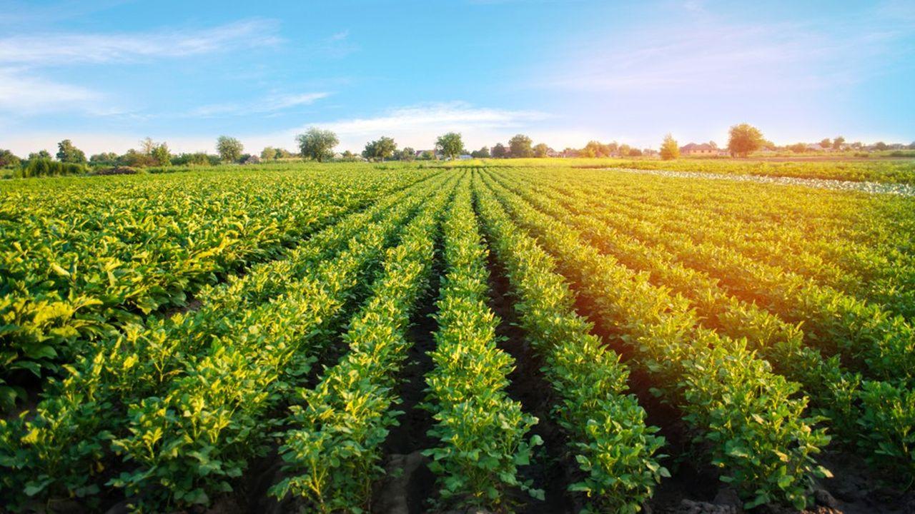 Des mots mêmes du ministre de l'Agriculture, qui était l'invité de BFMTV/RMC ce jeudi, l'objectif de 15% des surfaces agricoles cultivées en bio en France à l'issue du quinquennat ne sera pas atteint