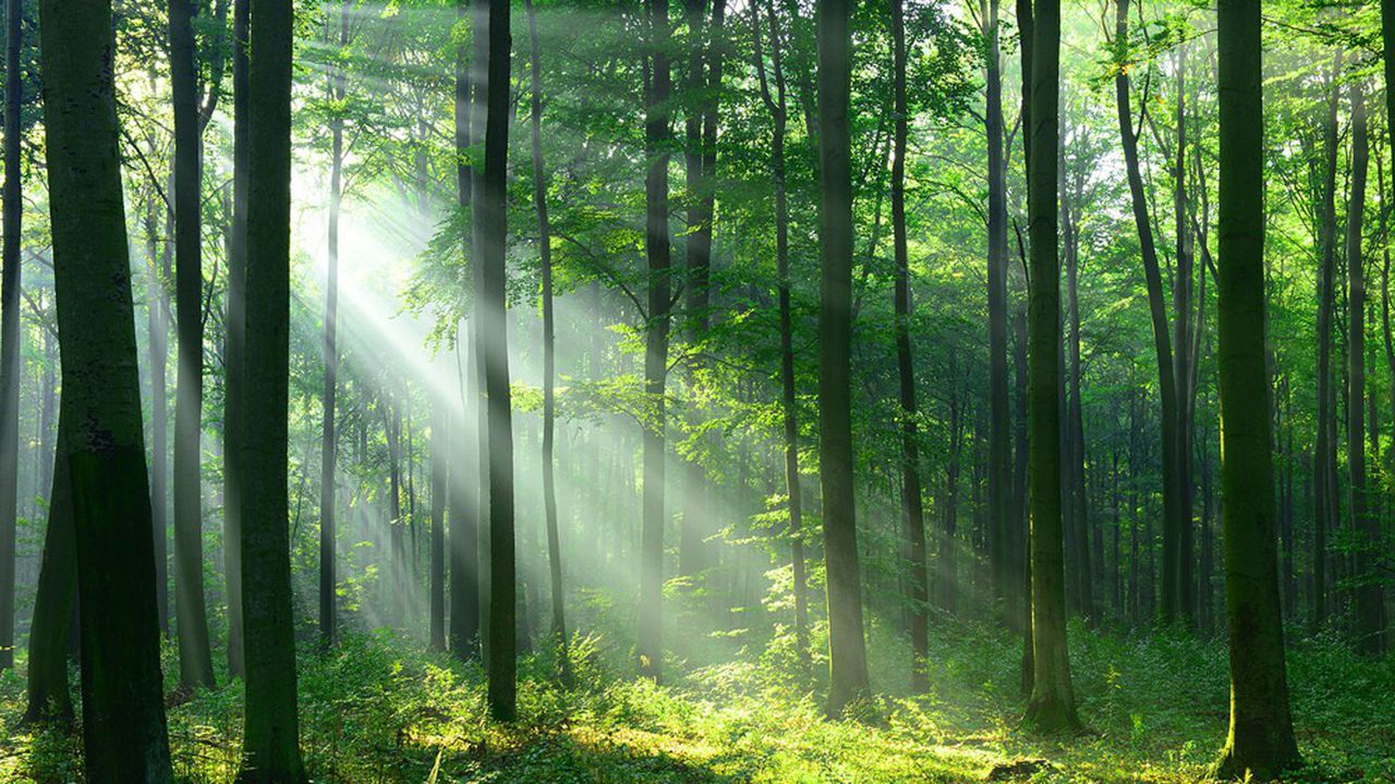 Le département de l'Essonne vient d'acquérir le Bois des Montils