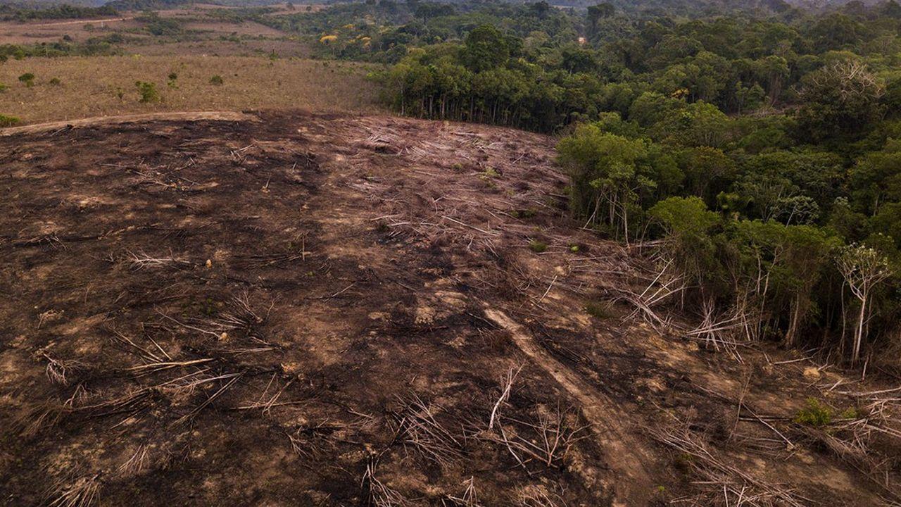 11.000 kilomètres carrés de forêt amazonienne sont partis en fumée l'an dernier.