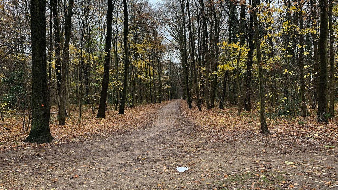 La forêt de Bondy, qui borde les communes de Clichy-sous-Bois, Montfermeil et Coubron en Seine-Saint-Denis, est l'un des principaux «poumons verts» du département.