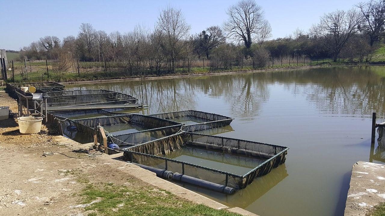La réserve naturelle régionale se mue aujourd'hui en laboratoire à ciel ouvert d'une production piscicole conciliant respect de l'environnement et valeur ajoutée.