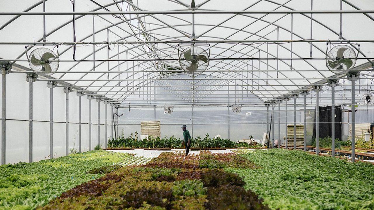 A côté de Bordeaux, Les Nouvelles Fermes produisent 2tonnes de truites arc-en-ciel et 20tonnes de produits frais sur 1.000mètres carrés.