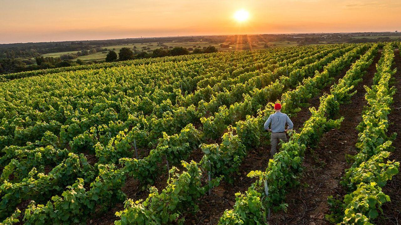 Il faut garder à l'esprit que le vigneron vit pauvre mais meurt riche grâce à son foncier qui connaît une revalorisation annuelle plus performante que sa rentabilité.