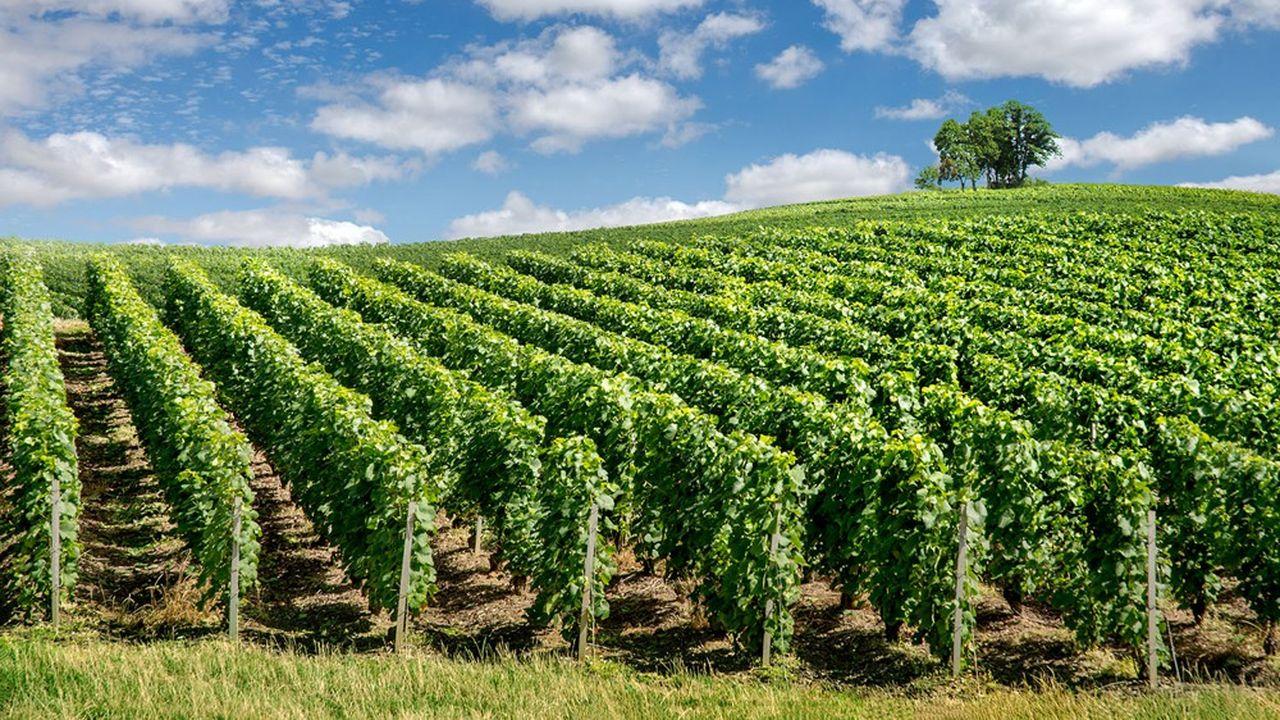 Les néo-vignerons représentent 60 % des acheteurs mais 40 % des transactions, plus longues à concrétiser.