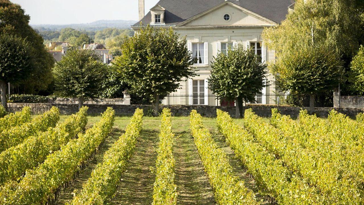 Les vignes du Château de Brézé, en Anjou. Dans le Val de Loire, le ticket d'entrée moyen pour acquérir un vignoble est de 1,5 million d'euros. Les ventes y ont progressé de 30 à 40 % en 2019.