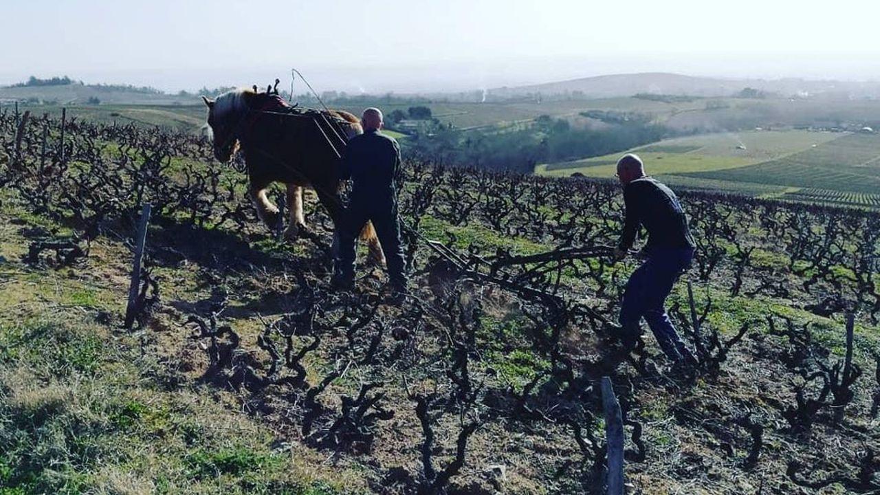 Philippe Viet cultive en bio 2,5 hectares de vigne sur la commune de Régnié-Durette, dans le Rhône.