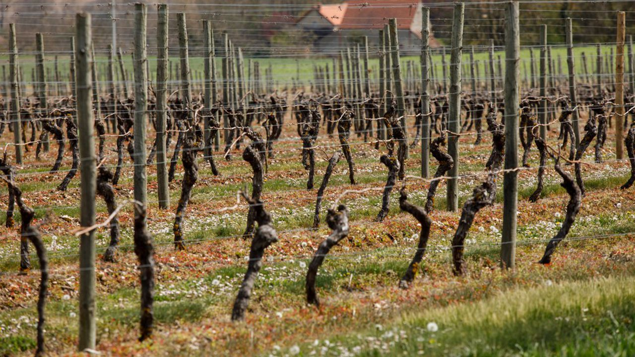 Le ministre de l'Agriculture, Julien Denormandie, a qualifié l'épisode de gel d'avril de «plus grande catastrophe agricole de ce début de XXIesiècle».