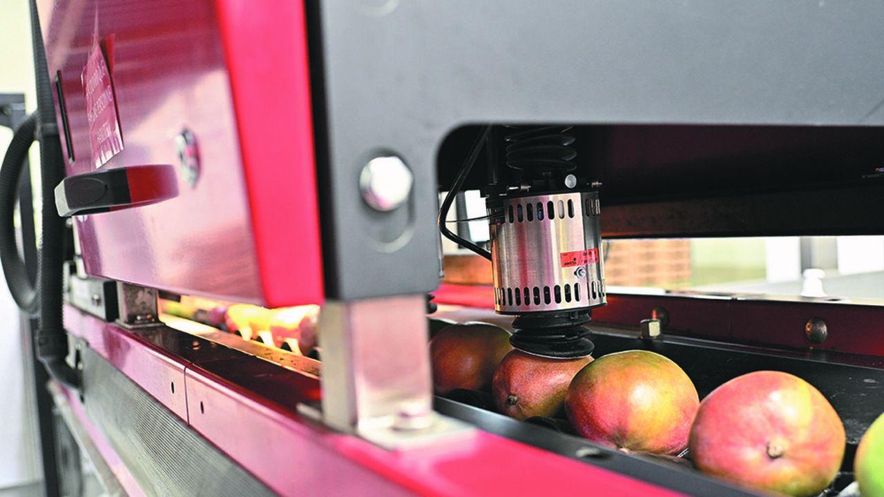 Omer-Decugis conditionne 100.000 tonnes de fruits et légumes exotiques à Rungis.