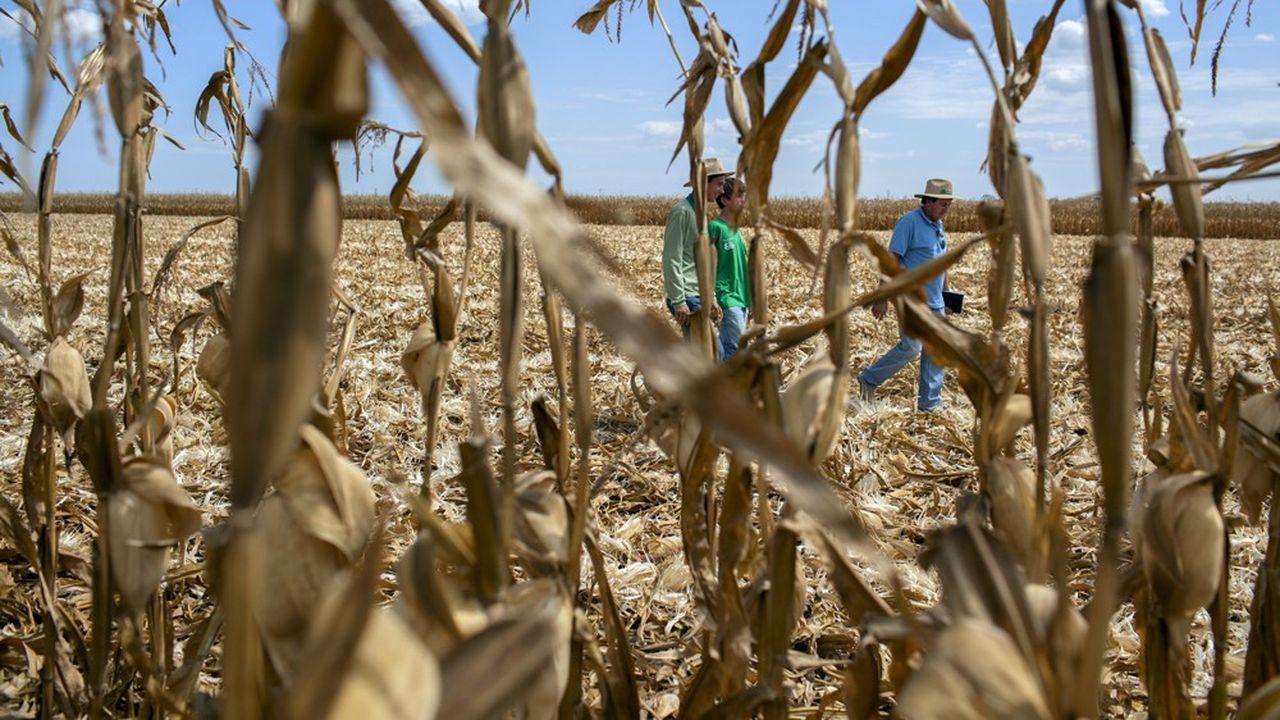 La sécheresse au Brésil qui a frappé la culture du maïs est l'une des principales causes de la hausse des céréales.