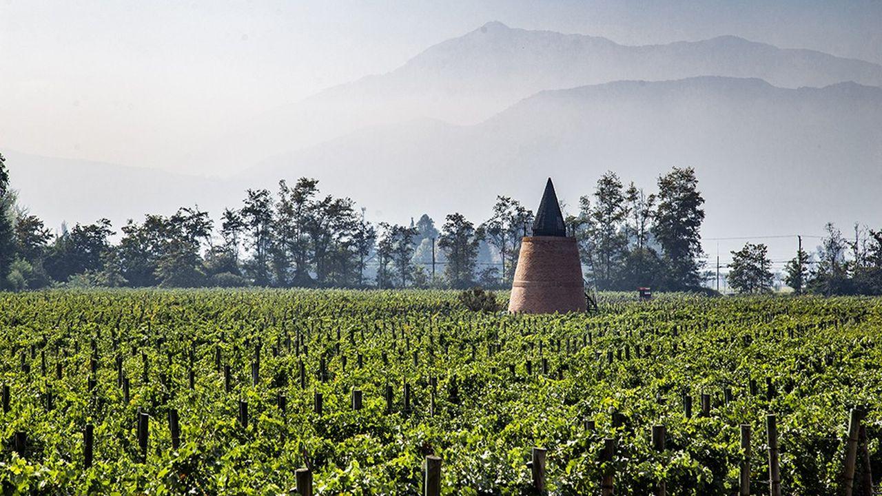 Le vignoble de Piedra Sagrada, au Chili.
