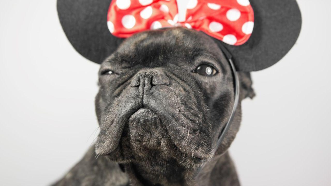 Oui, ce bulldog français déguisé en Minnie nous juge.