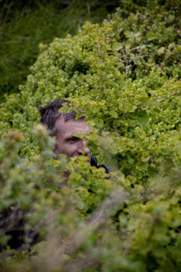 Mark Brown dans son jardin et un Ginkgo biloba, une des plus anciennes espèces connues.
