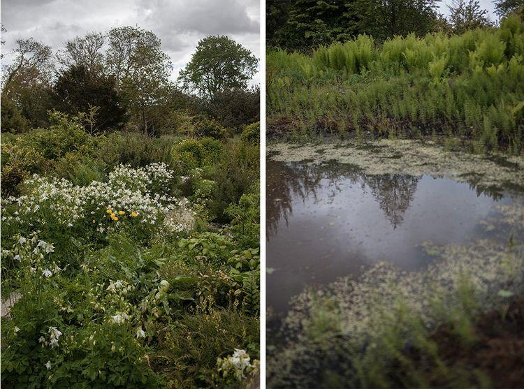 A L'Aube des fleurs, le jardin sec avec le massif d'ancolies blanches et la mare aux monocotyledones, prêles (Equisetum) et bowmanii.