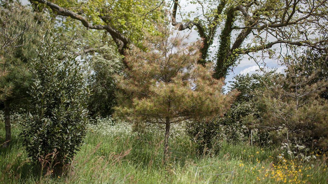 Dans son jardin, L'Aube des fleurs, Mark Brown a rassemblé des milliers de végétaux du jurassique et du crétacé (ici laurier et pin blanc).