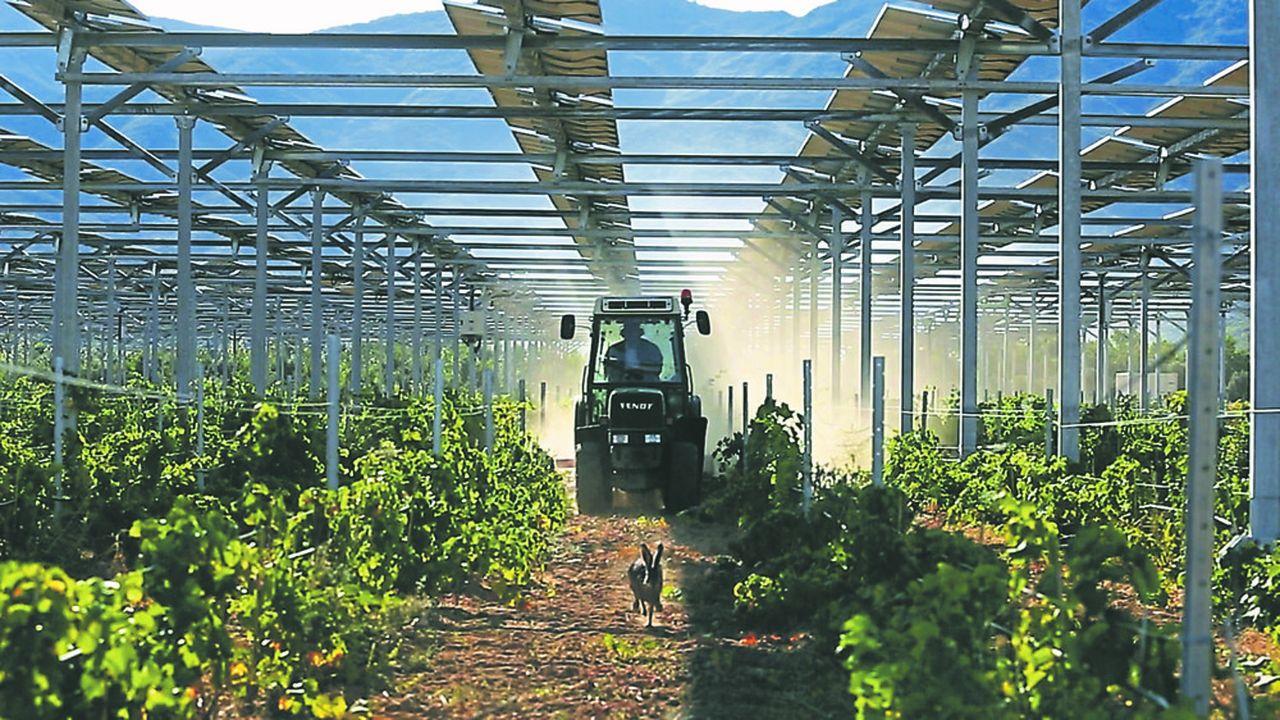 Démonstrateur agrivoltaïque qui combine production électrique et protection des cultures sur des vignes à Tresserre, dans les Pyrénées-Orientales.