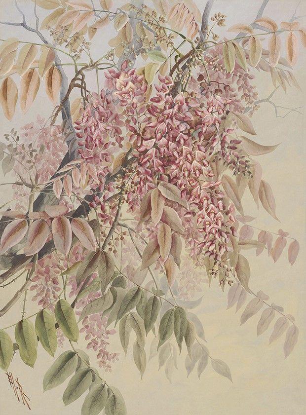Feuilles et fleurs de Millettia pinnata (arbre de pongolote). illustration d'Ellis Rowan.