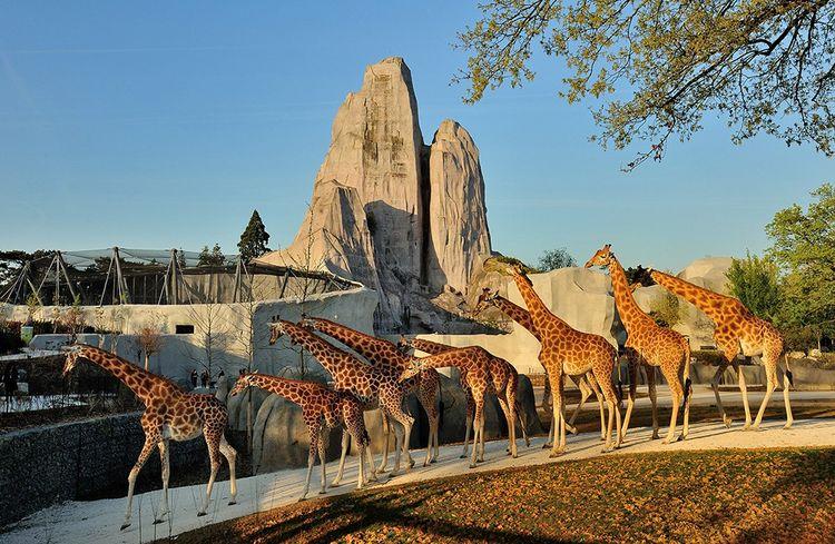 Au parc zoologique de Paris.