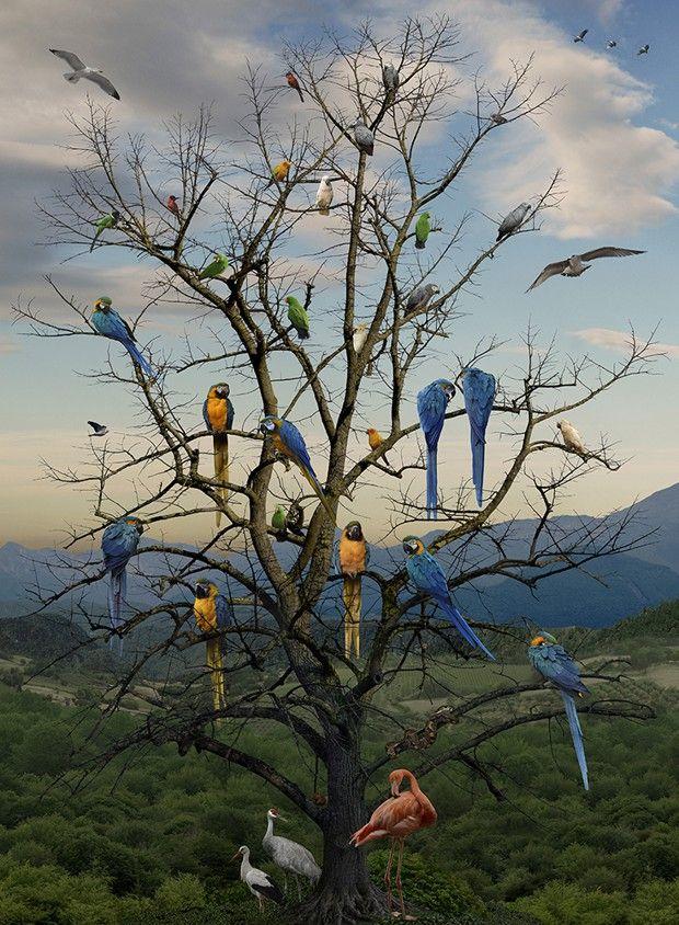 « L'Arbre aux oiseaux », photographie d'Eric de Ville (2018).