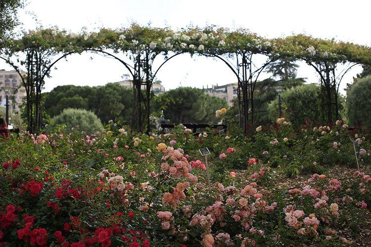 La roseraie Princesse-Grace, témoin de sa passion des fleurs.