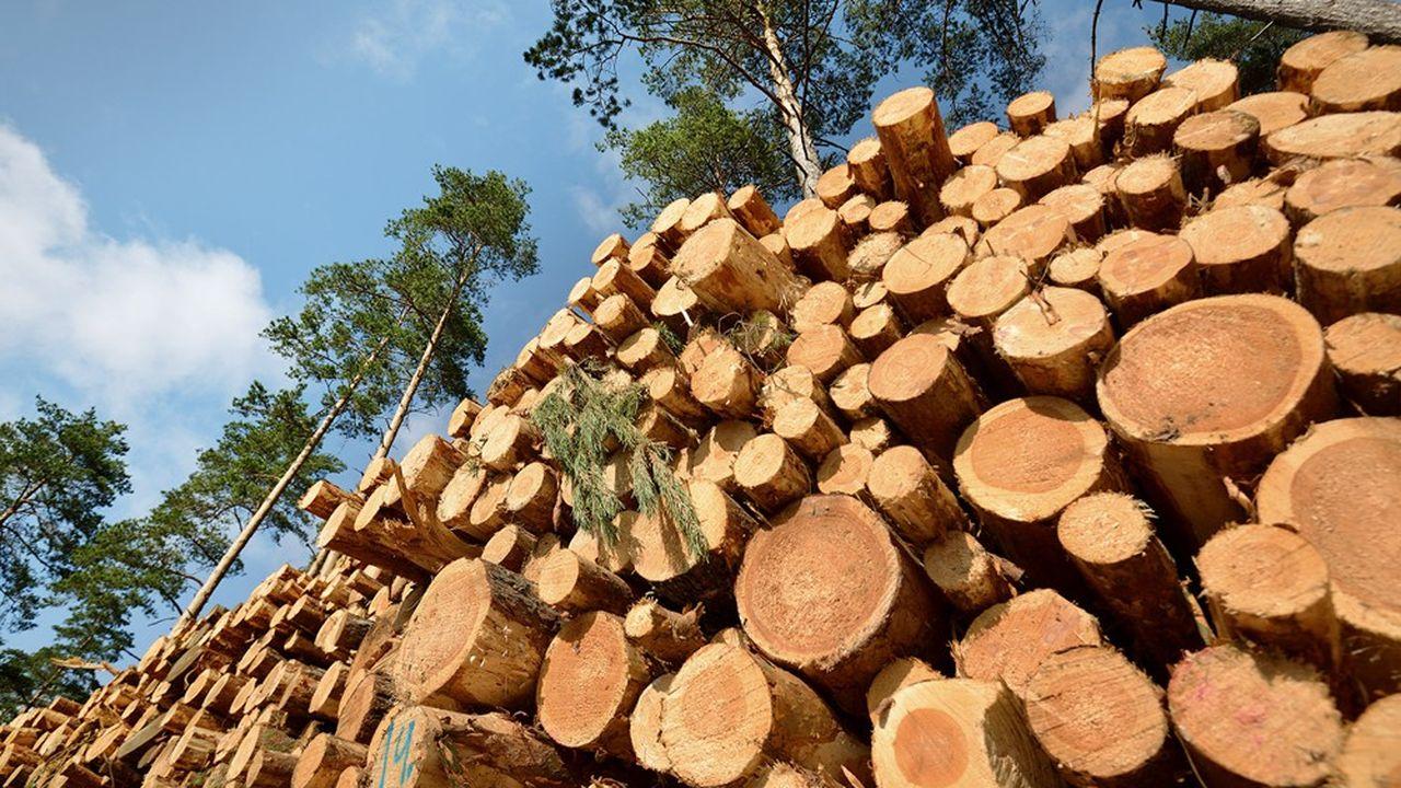 Climat : l'Europe surestime les capacités de ses forêts