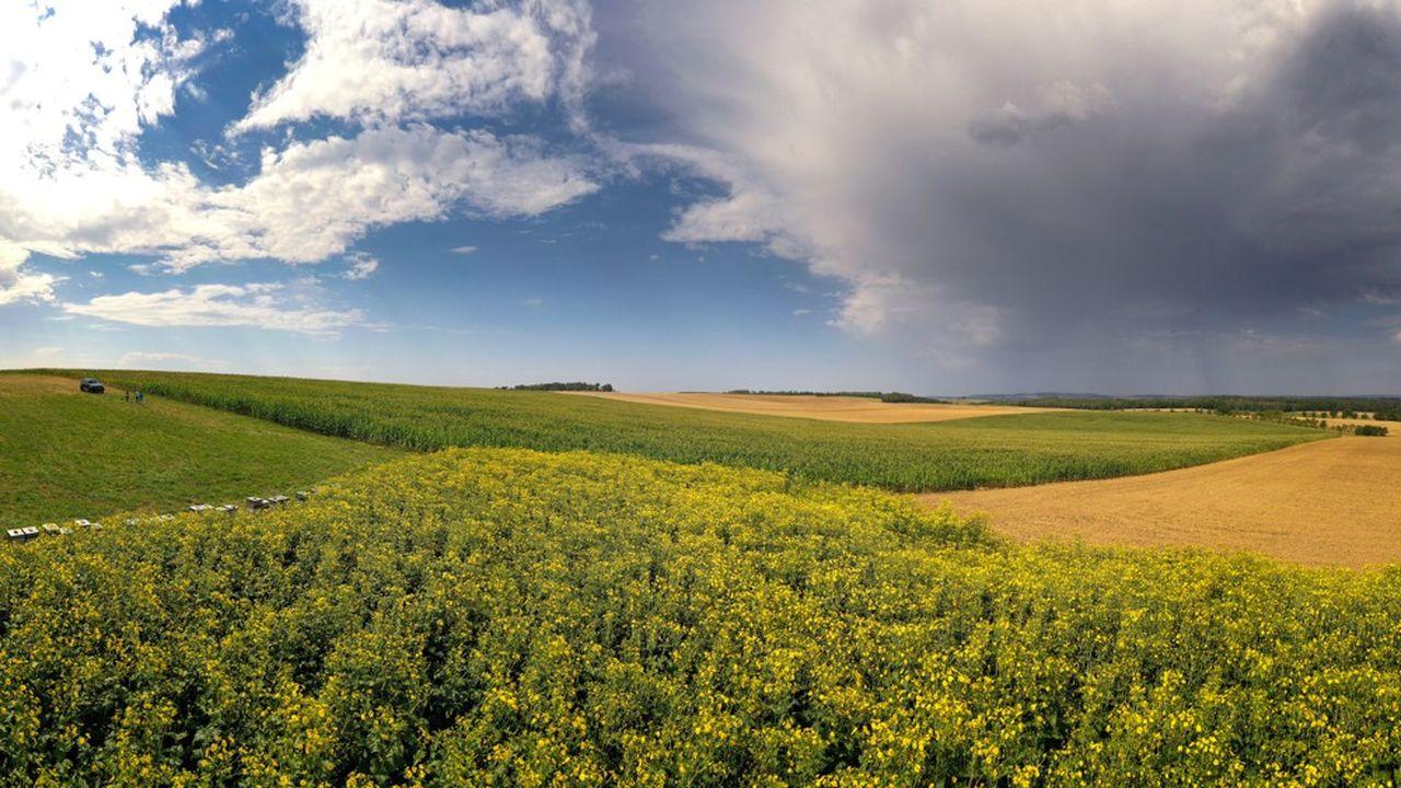 La réforme de la PAC prévoit l'obligation de mettre entre 4 et 7% des terres cultivables en jachère.