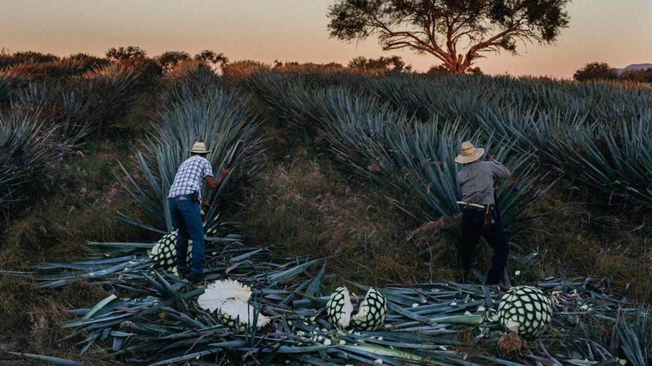 Moët Hennessy a noué un partenariat à 50-50 avec un homme d'affaires mexicain, Juan Gallardo.