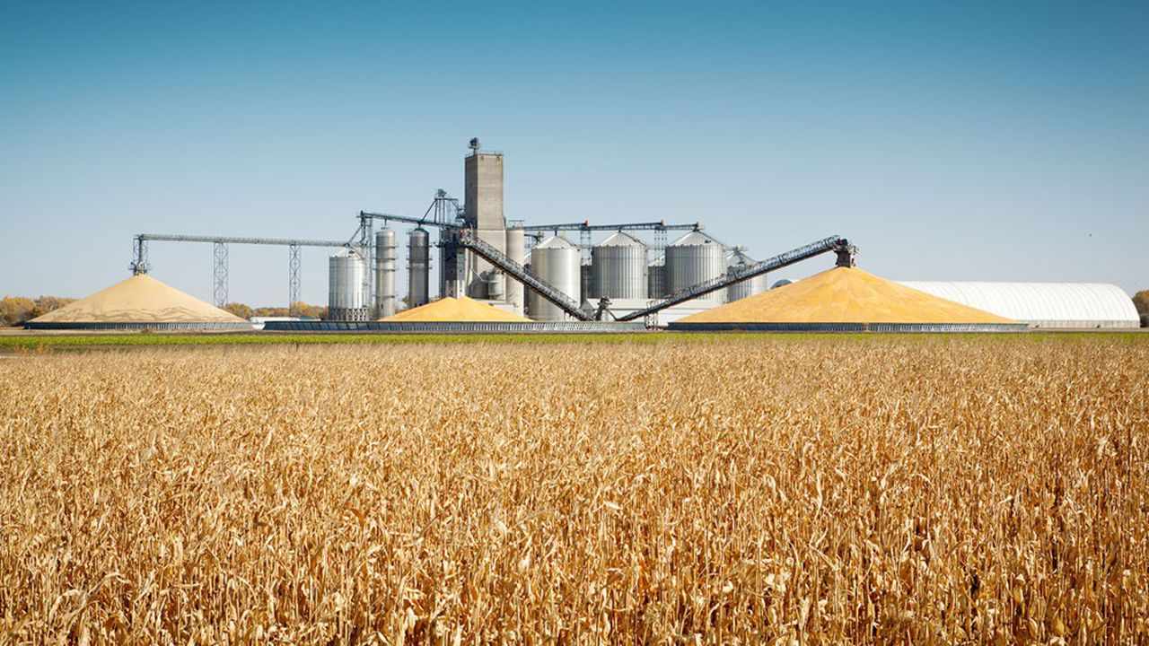 Aux Etats-Unis, les pluies sur la Corn Belt offrent des perspectives de production de maïs positives.