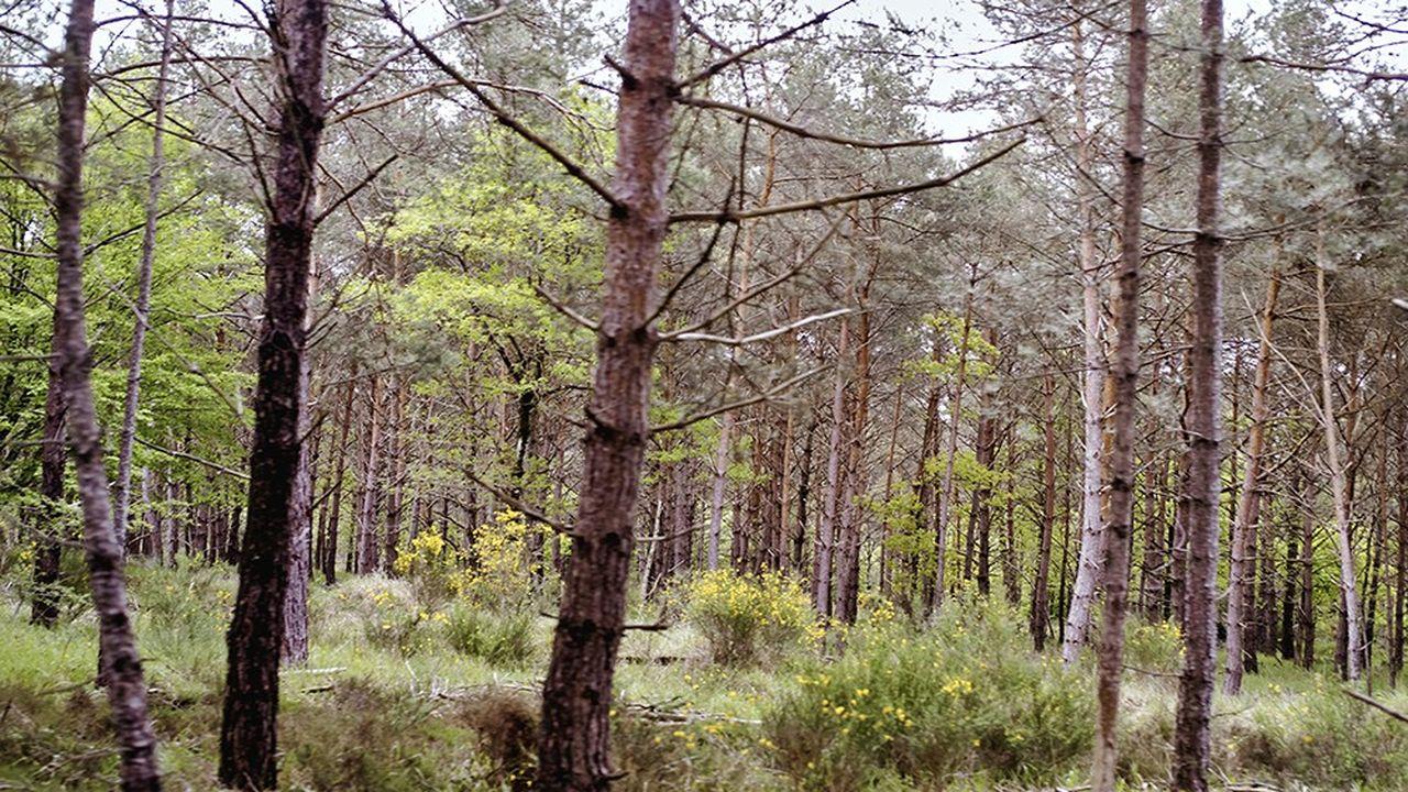 Dans le secteur du Rocher de Milly, en forêt de Fontainebleau, labellisée Forêt d'exception en 2013.