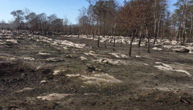 Un incendie a ravagé près de plus de quatre hectares l'été dernier. Dans la nuit du 4 août, jusqu'à 12 engins venus de 7 centres de secours différents ont été mobilisés.