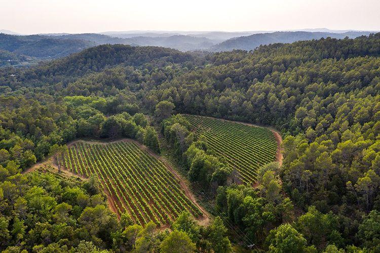 Le Château Marguï, et ses 118 hectares à 250 m d'altitude, est la propriété du réalisateur George Lucas depuis 2017.
