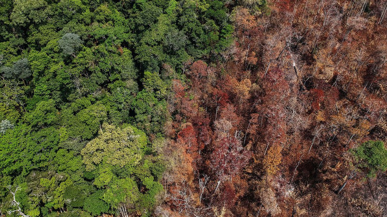 En raison du changement climatique et de la déforestation, une grande partie du bassin de l'Amazonie émet désormais du CO2 au lieu d'en absorber.
