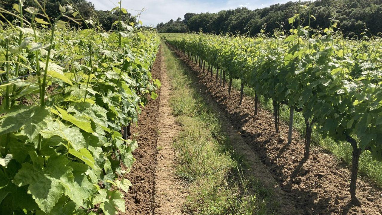 La parcelle de Syrah de 2,5ha du Mas des Boutes, à Tresques (Gard) va faire l'objet de cette nouvelle approche de pilotage du vignoble mise au point par P, erret SA.