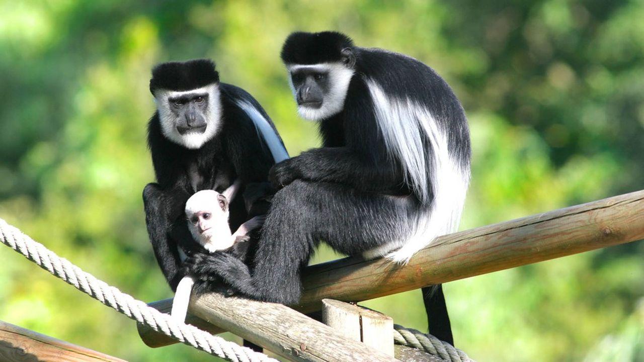 Le leader des parcs français résiste grâce à des visites programmées longtemps à l'avance.