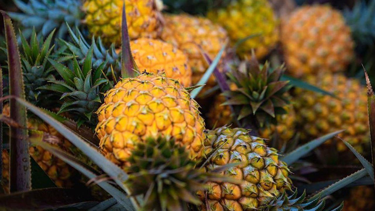 L'ananas Victoria fait partie des produits phares de La Réunion expédiés par Colipays.