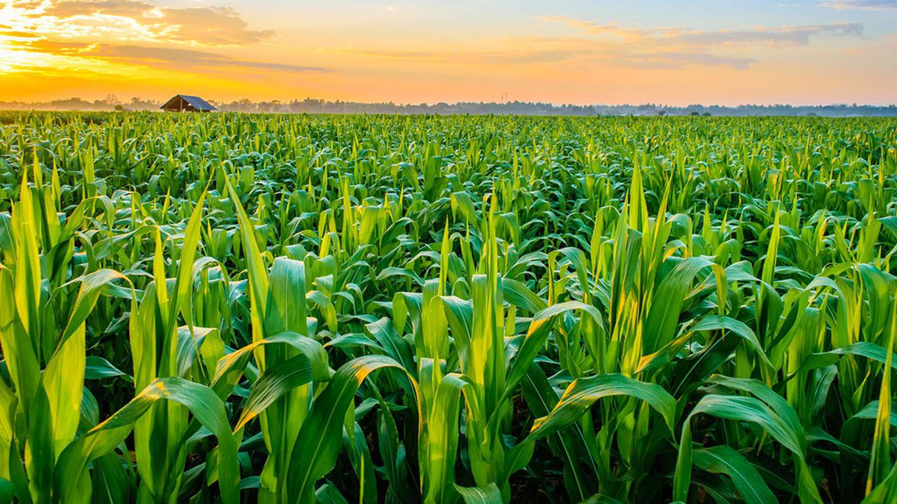 Ce texte a été initialement motivé par l'achat par des étrangers de terres agricoles via des sociétés.