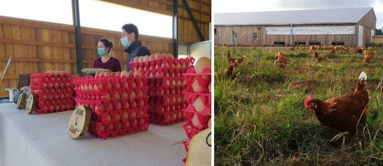 Marine et Adrien Pouxvielh, en couple à la ville et à la ferme, élèvent 1.800 poules rousses sur leurs six hectares de leur domaine d'Esteve.